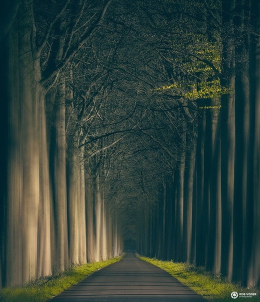 Фотограф Rob Visser в своей новой серии фотографий показал совершенно фантастические фотографии леса Всего на съемку он потратил около 8 месяцев. Источником вдохновения и местом съемки стали
