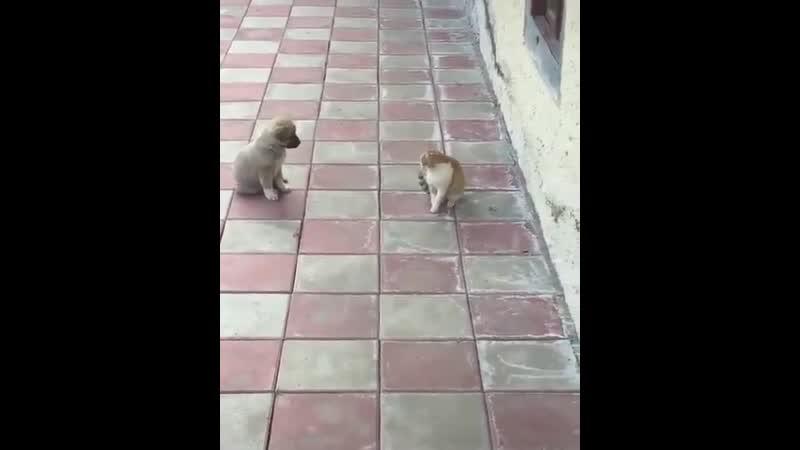 Котик забияка 😼😻
