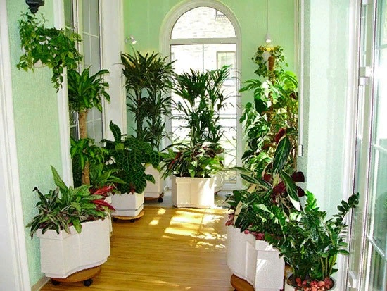 Для чего нужны комнатные растения в доме