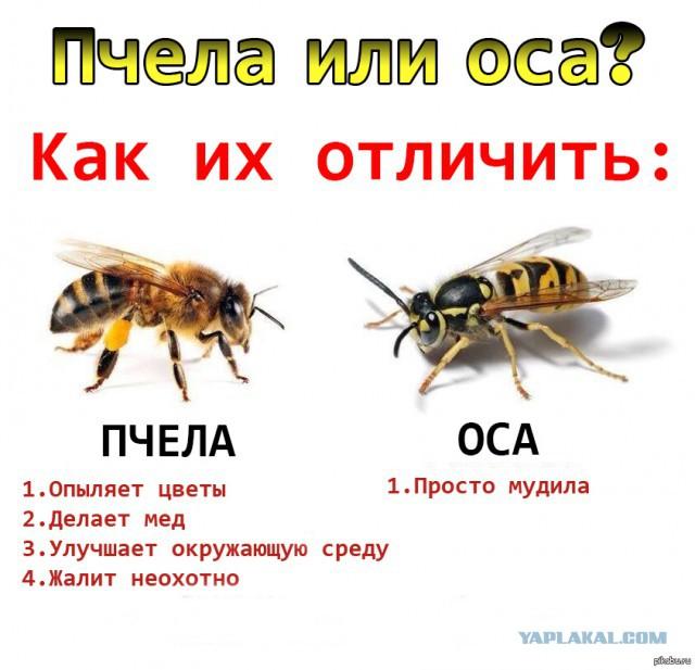 https://pp.userapi.com/c853424/v853424659/a248b/2wE_nlQnRTk.jpg