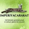 ИМПЕРИЯ КАРАКЕТ- питомник уникальных кошек