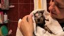 Первое купание щенков йоркширского терьера🐶