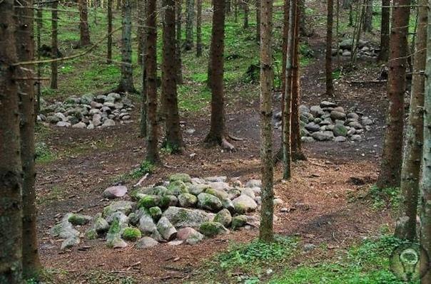 Мистический Покайнский лес и племя Земгалов В Южной части Латвии расположена историческая область Земгале, на территории которой когда-то проживало древнее балтийское племя земгалов. Эта область