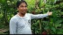 Индонезия знакомство с растениями. Моринга. Школа космоэнергетики MadreCósmica