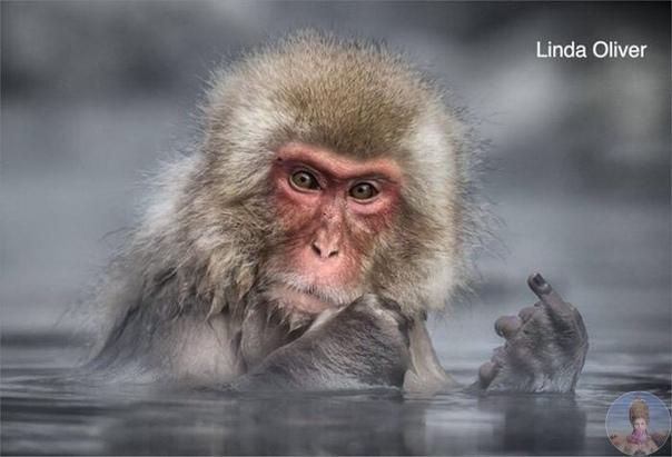 Забавные фото из дикой природы