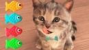 Fun Pet Care Game - Cute Kitten Alone At Home - Little Kitten My Favorite Cat - Cartoon Kids Games
