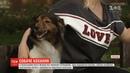 У Польщі пес покинув хазяйку, щоб відшукати свою кохану