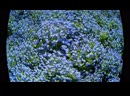мАаленький цветочек - целиком моя песенка, она есть на моем канале в Ютубе