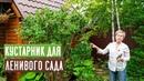 ЖАСМИН САДОВЫЙ или ЧУБУШНИК 🌸 Особенности выращивания ухода и ОБРЕЗКА Садовый гид