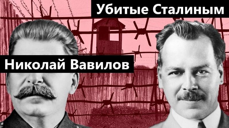 Убитые Сталиным | Николай Вавилов