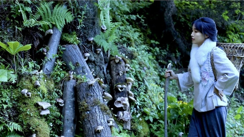 我把香菇种到山里啦!I planted shiitake mushrooms in the mountain Liziqi Channel