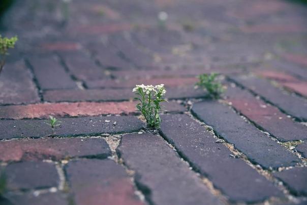 Порой мы так боимся ошибиться, что смиряемся там, где ещё несколько минут были полны оптимизма