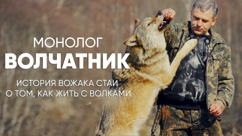 Вожак стаи волков монолог о том как жить с дикими зверями