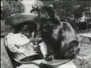 Lumière Brothers - The Little Girl And Her Cat