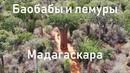 Баобабы и лемуры Мадагаскара | Колючий лес (Spiny forest) | Африка | Алексей Рыжов