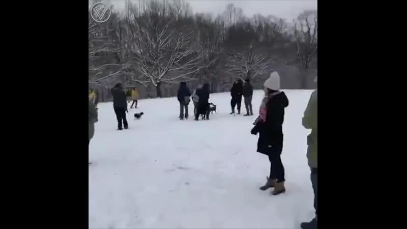 Гончая устроила массовый беспорядок в парке