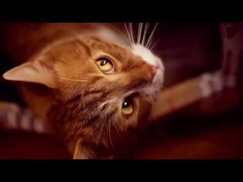 Странно, что кот не издал не единого звука — ни обычного мяуканья, ни довольного мурчания
