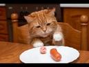 Смешные кошки 2019 Новые приколы с котами до слёз, смешные коты приколы 2019 funny cats 74