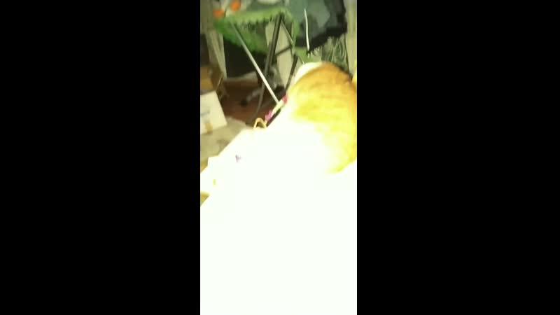 Miniş Venüs ile uyuyor