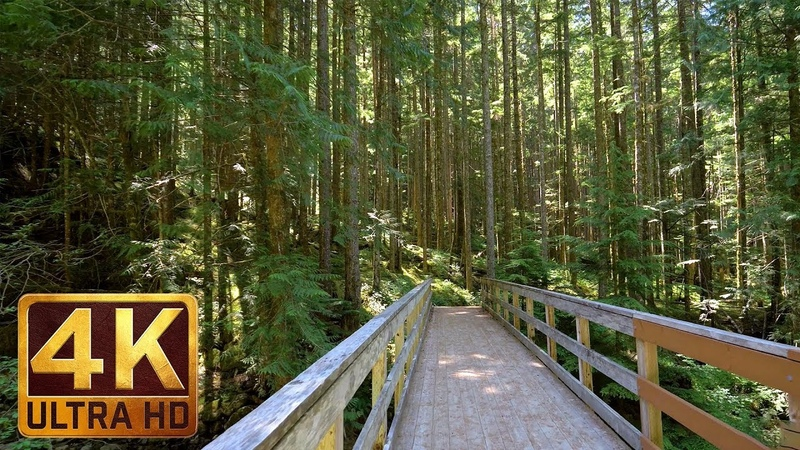 4K UHD Virtual Hike in the Forest - Middle Fork Trail, Snoqualmie   Part 2 - 3.5 HRS Piano Music
