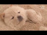 Puppies Detox Their Body In A Hot Sand Bath Kritter Klub