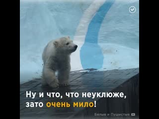 Милые медвежата в зоопарке Новосибирска