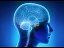 практика для восстановления гармонии в полушариях мозга