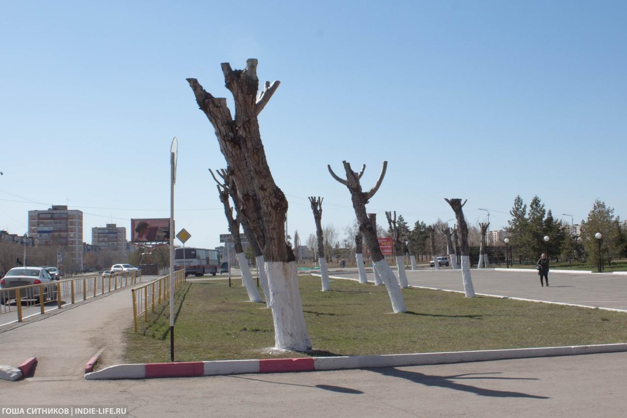 Уродливые деревья Рудный