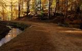 Autumn forest walk vol 2.0