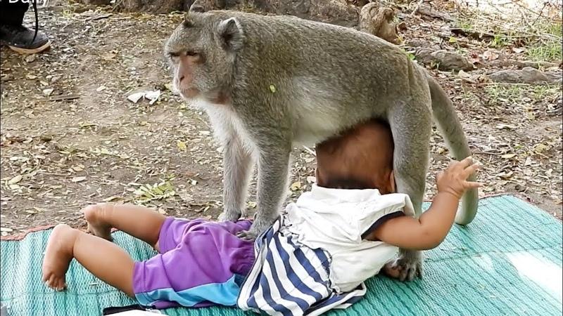 Sok Monkey Baby Human Sok monkey Kiss Baby strong protection all baby