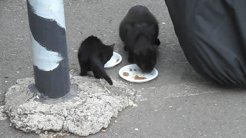 Звездочка с совсем черненьким котенком