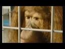 IDIOCRACY film complet en francais