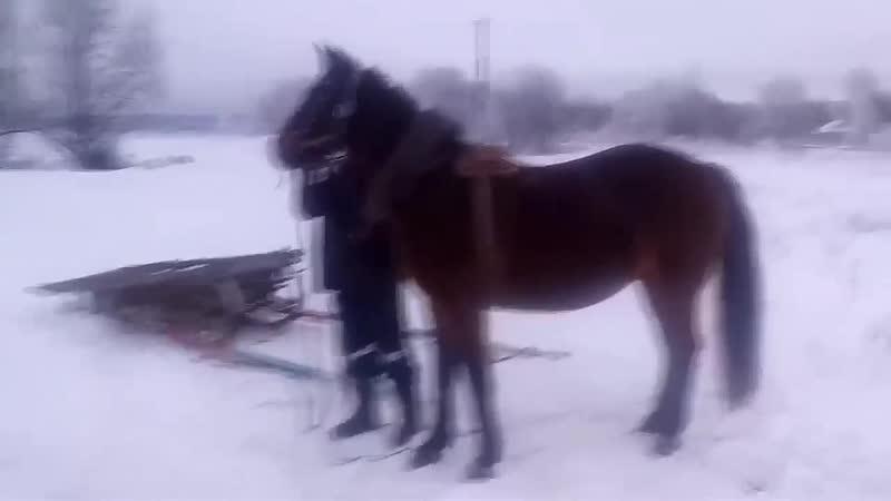 Хитрая лошадь Полная версия
