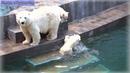 Разыгрались медвежата распотешились