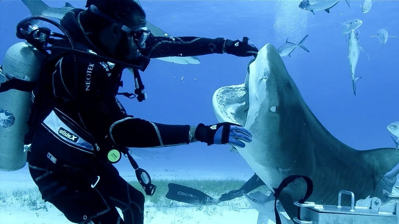 Sharks in the Bahamas | Blue Planet Live | BBC Earth