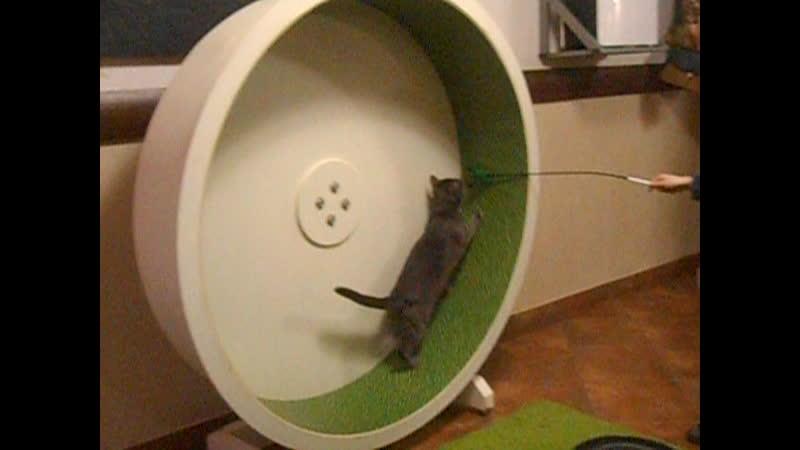 Котик возмущен