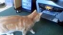 Смешные видео про кошек Смешные кошки