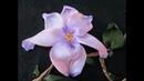 Магнолия. Вышивка лентами.Magnolia. Embroidery ribbons.
