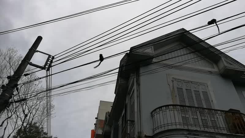Бразилия, Рио обезьянки игрунки