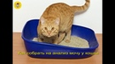 Как собрать мочу у кошки