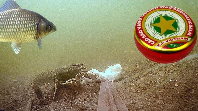 Бальзам ЗВЕЗДОЧКА работает?! Подводная съемка. Карась, рак, плотва