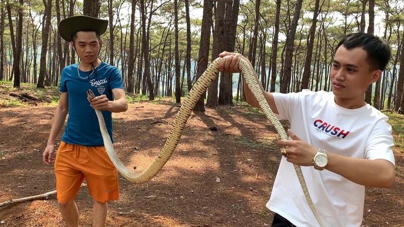 Vô rừng thông chụp đuôi được rắn to chà bá cái kết quay tay 100 vòng - People vs snake cobra