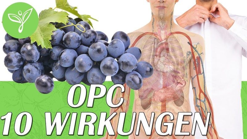 Schau was OPC Traubenkernextrakt in Deinem Körper bewirken kann