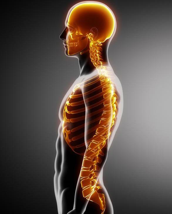 Эпигастральная грыжа может возникать ниже грудной клетки и выше пупка.