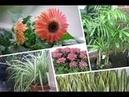 ★ Подкормка комнатных растений Эти лучшие домашние подкормки вернут жизнь даже сухому кусту