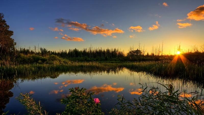Упоительное пение соловья летним вечером Звуки природы Nature Sounds