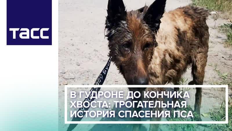 В гудроне до кончика хвоста Трогательная история спасения пса