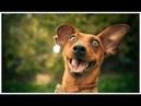 позитивчик собаки - улыбаки