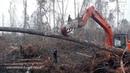 Sadness As An Orangutan Tries To Fight The Bulldozer Destroying Its Habitat