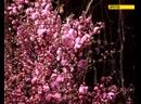 Ботанический сад в цвету
